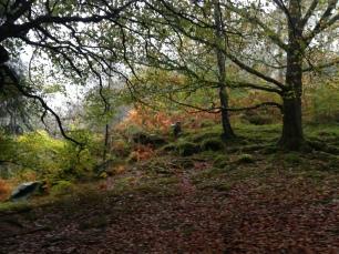 Stunning autumn colours